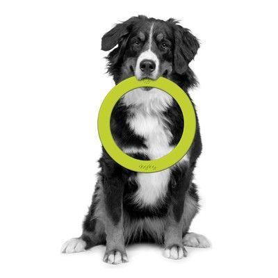 Petprojekt™ Dogring (2 Farben)