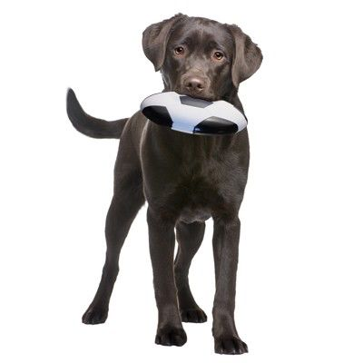 Petprojekt™ Fetch Flyer Fussball